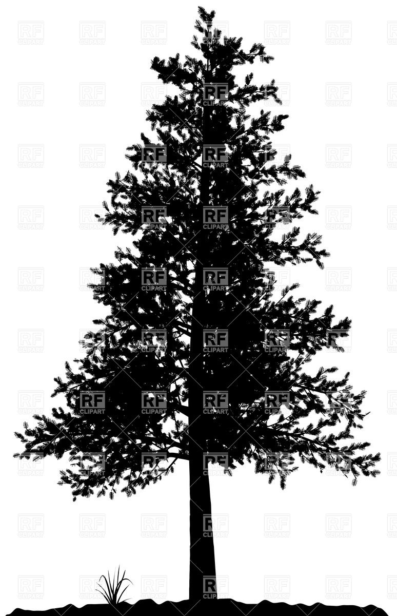 High Detailed Pine Tree Silhouette On White Background Download