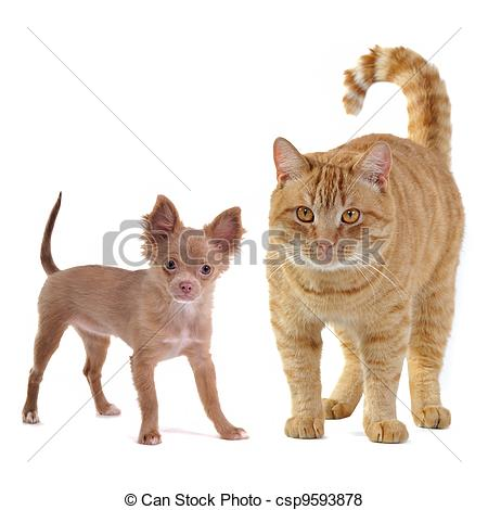 Stock Photo   Small Dog And Big Cat   Stock Image Images Royalty