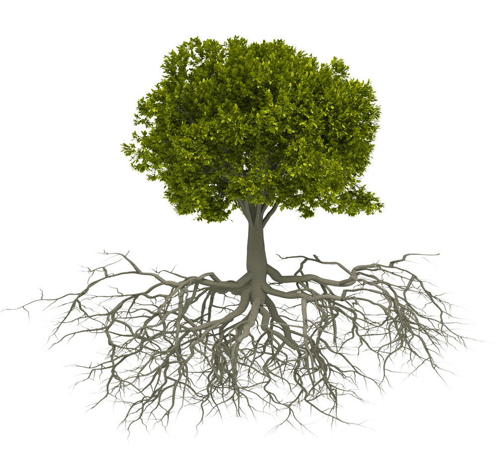 Image result for tree & roots