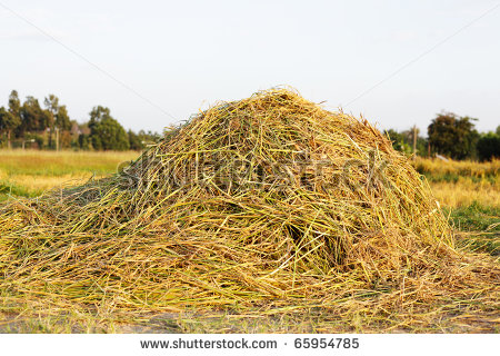 Hay Pile Clipart Pile Of Rice Hay   Stock Photo