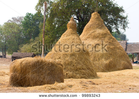 Pile Of Hay Straw Rice Stock Photo 99893243   Shutterstock