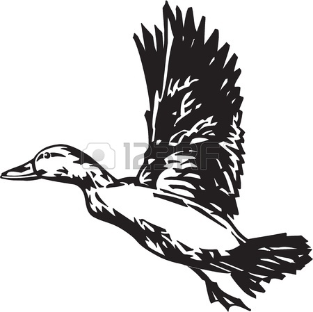 Duck Hunting Clipart 13014817 Pintail Duck Jpg