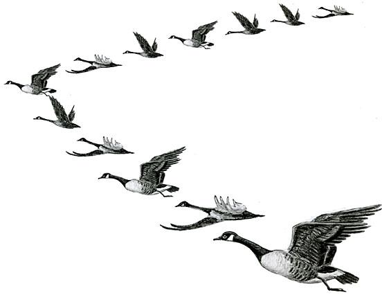 Goose Outline Clip Art