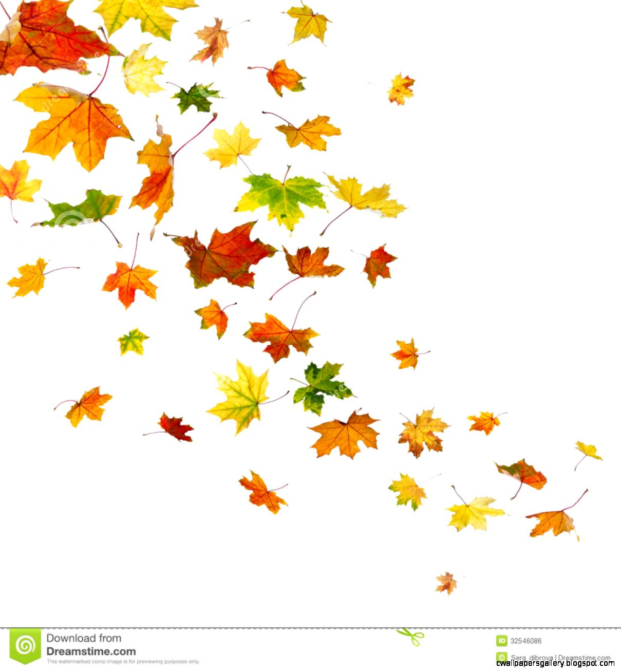 Maple Leaf Border Clipart - Clipart Kid