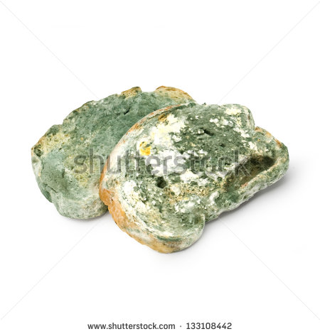 Moldy Bread Clipart Slices Of Bread Covered With