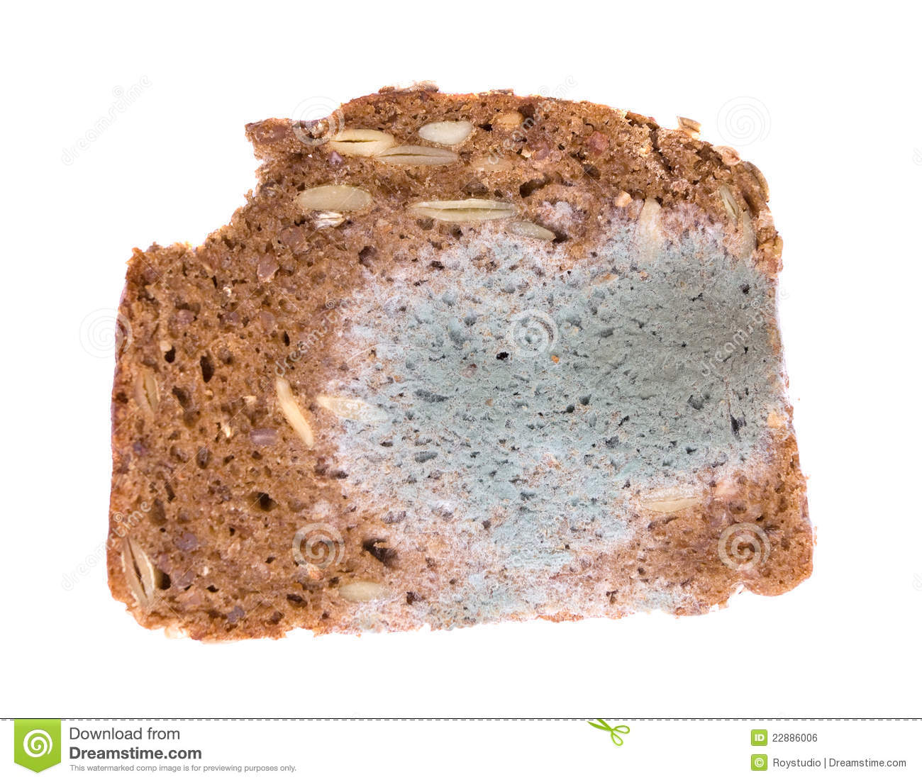 Moldy Slice Of Bread On White Background Royalty Free Stock Image