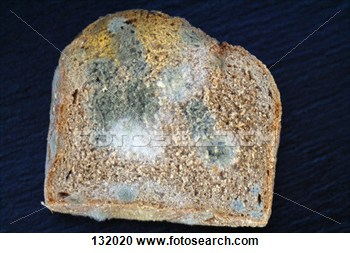 Stock Photography Of Piece Of Moldy Bread 132020   Search Stock Photos