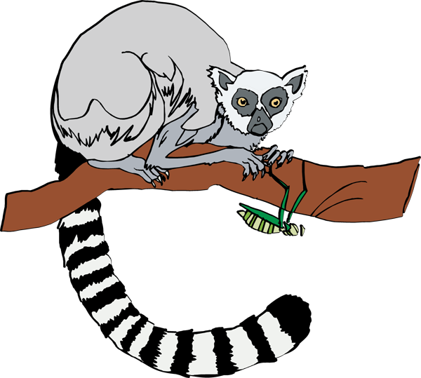 Lemur Clipart - Clipart Kid
