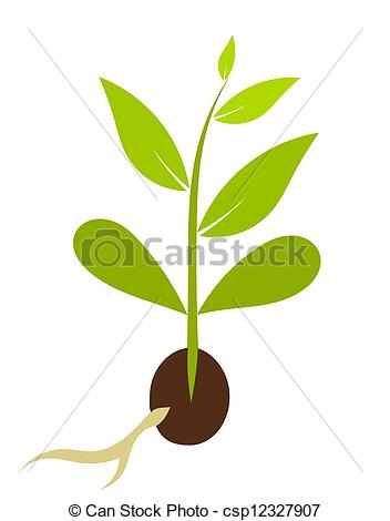 Little Plant Growing From Seed   Plant Morphology  Vector Illustration