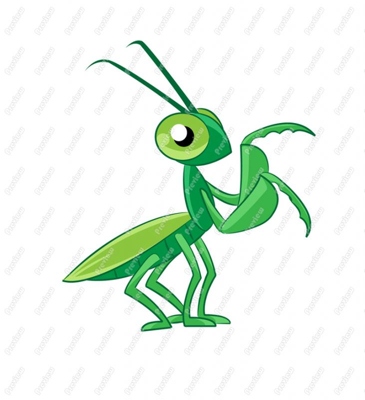 mantis cartoon clipart clipart suggest