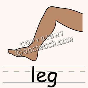 Clip Art  Parts Of The Body  Leg Color   Preview 1