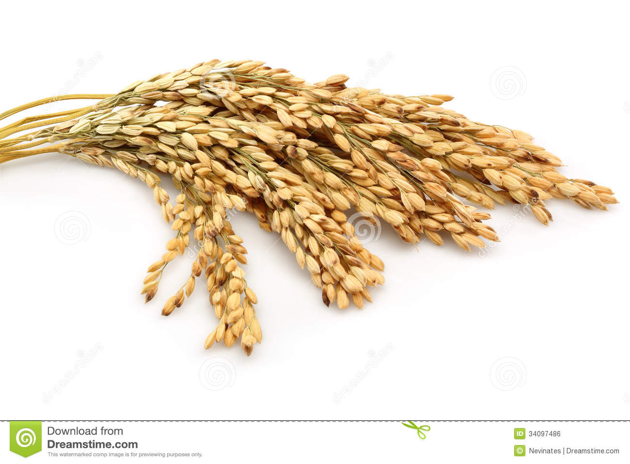 Rice Stalk Clipart - Clipart Suggest