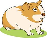 Clip Art Guinea Pig Clip Art guinea pig free clipart kid 01b 116 hits 643 size