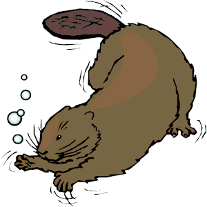 Clip Art Beaver Clip Art swimming beaver clipart kid cliparts of free download