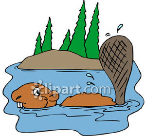 Beaver Swimming In A River   Royalty Free Clipart Picture
