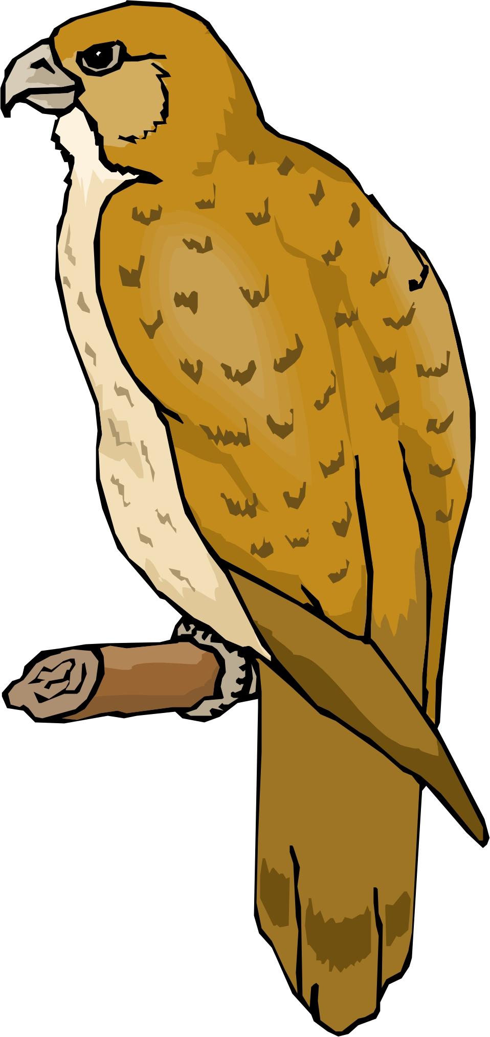 Cartoon Hawk Clipart - Clipart Kid