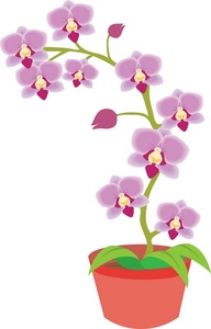 Clip Art Orchid Clip Art orchid clipart kid image potted plant