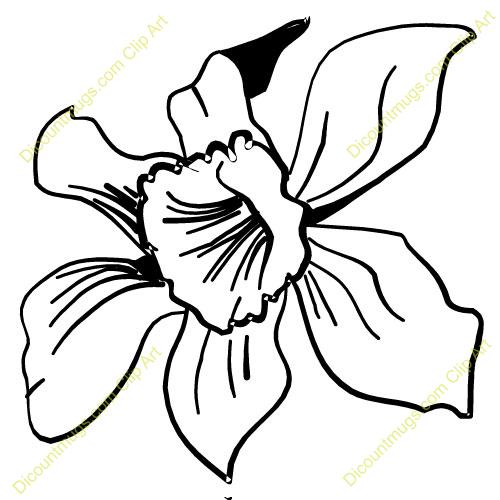 Clip Art Orchid Clipart orchid clipart kid flower clip art panda free images