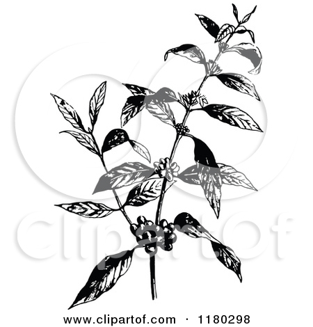 Coffee Plant Clipart - Clipart Kid