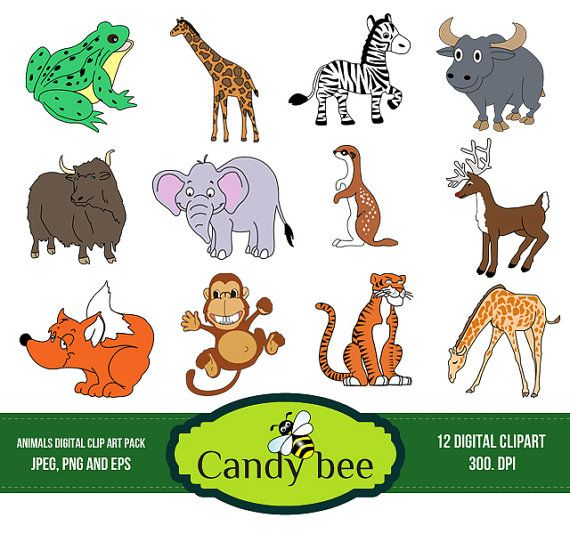 Baby Farm Animal Clip Art 72778 Jpg