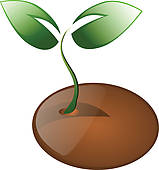 Plant Seeds Stock Illustrations   Gograph