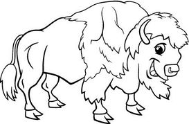 American Buffalo Clipart And Illustrations
