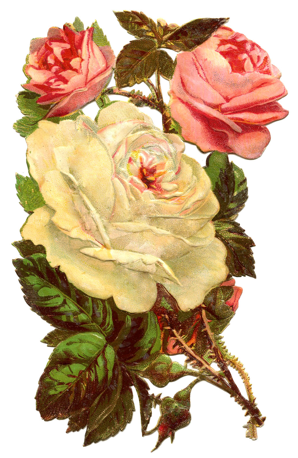 Antique Graphic   Pink And White Roses   The Graphics Fairy