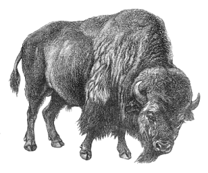 Free Bisons Clipart  Free Clipart Images Graphics Animated Gifs