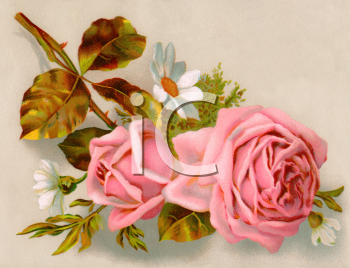 Royalty Free Victorian Rose Clipart