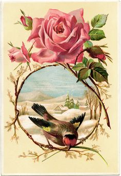 Victorian Rose Bird Card Vintage Rose Clip Art Vintage Bird Graphic
