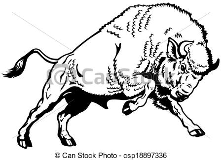 Wisent European Bison Attacking Pose Black And White Side View Image