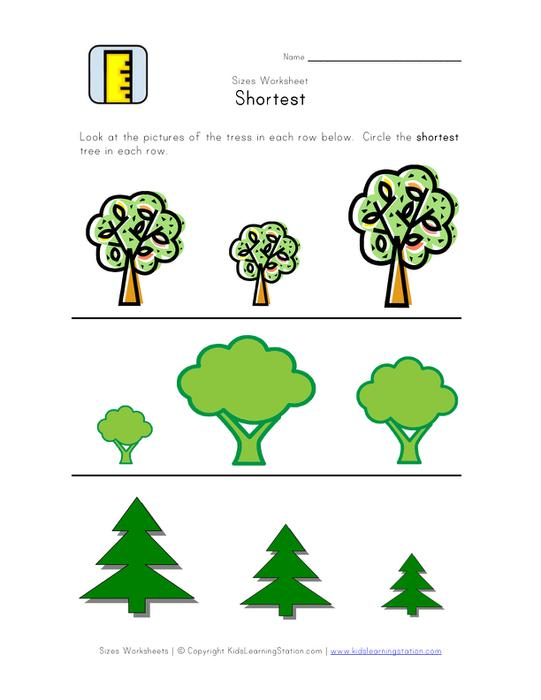 Worksheet With Different Types And Sizes Of Trees That Students Put In