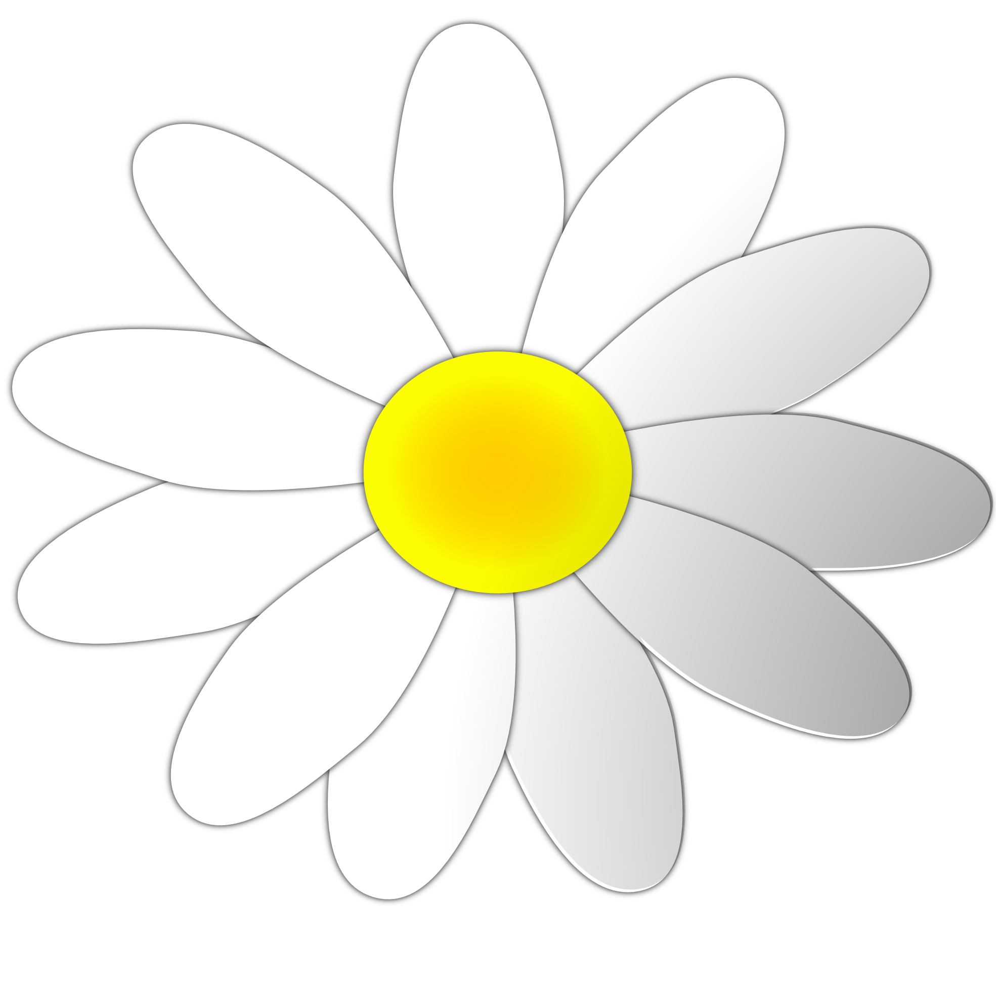 Cartoon Daisy Flower   Clipart Best