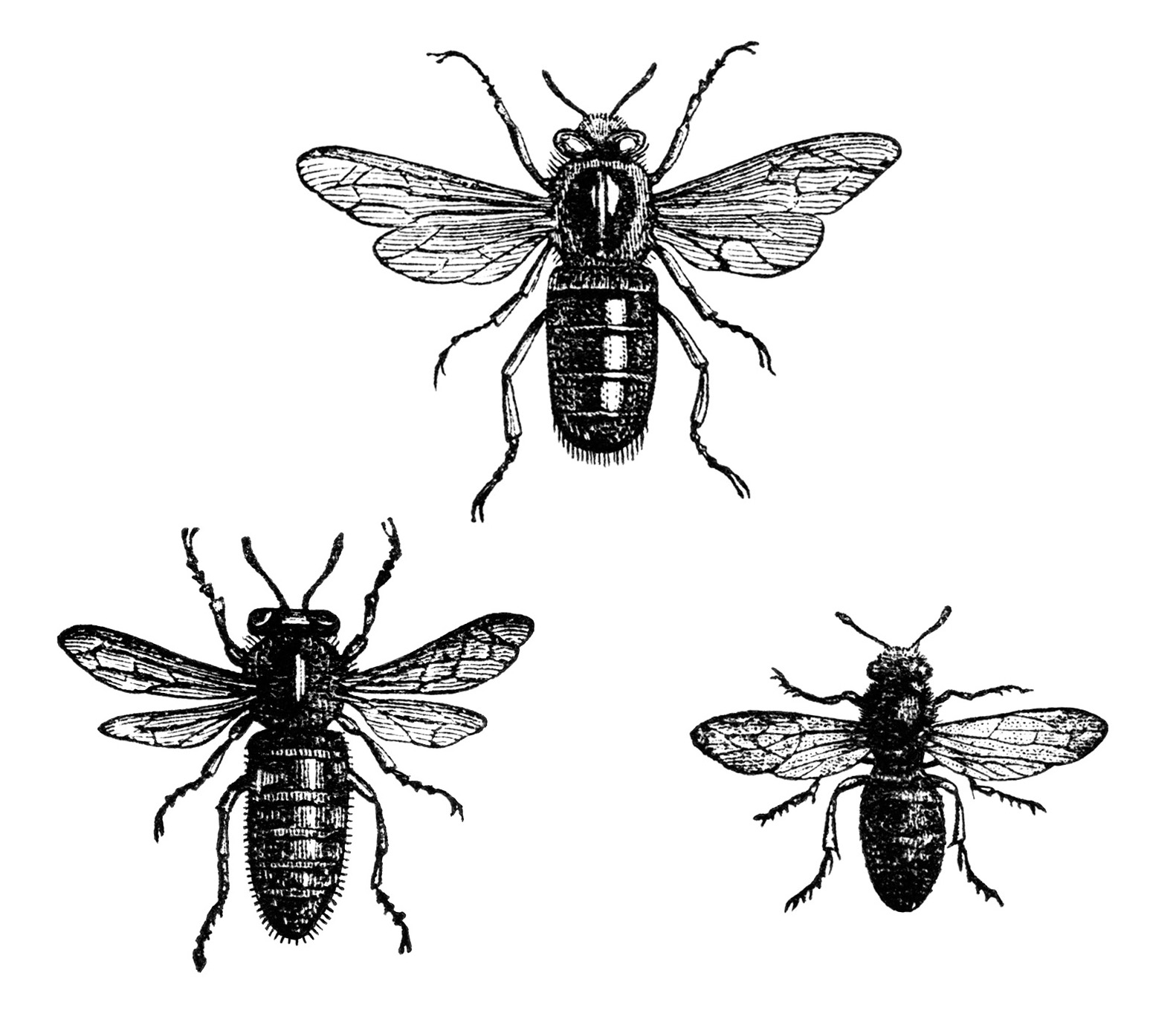 clipart french bee - photo #9