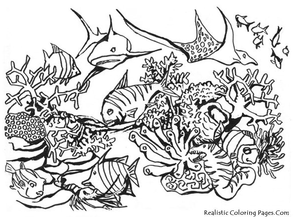 Ocean Animals Kids Coloring Pages