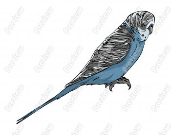 Realistic Budgerigar Bird Character Clip Art   Royalty Free Clipart