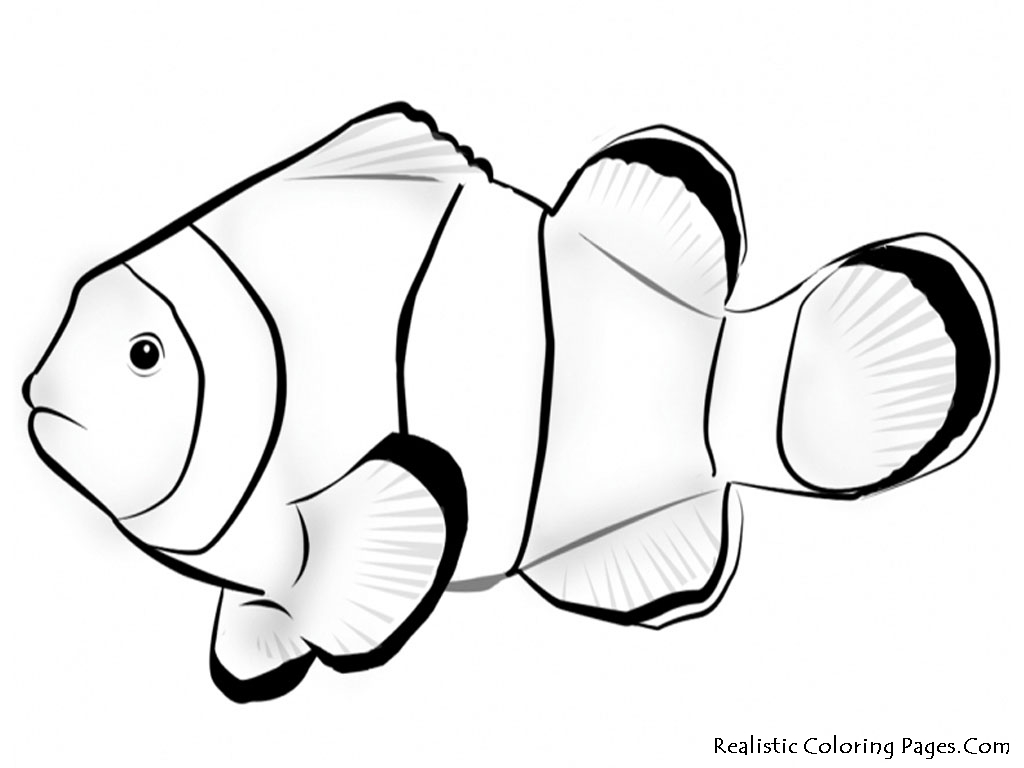 Realistic Frog Coloring Pages Nemo Fish Coloring Pages Realistic