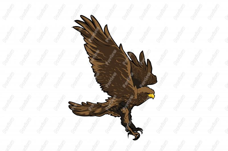 Realistic Hawk Character Clip Art   Royalty Free Clipart   Vector