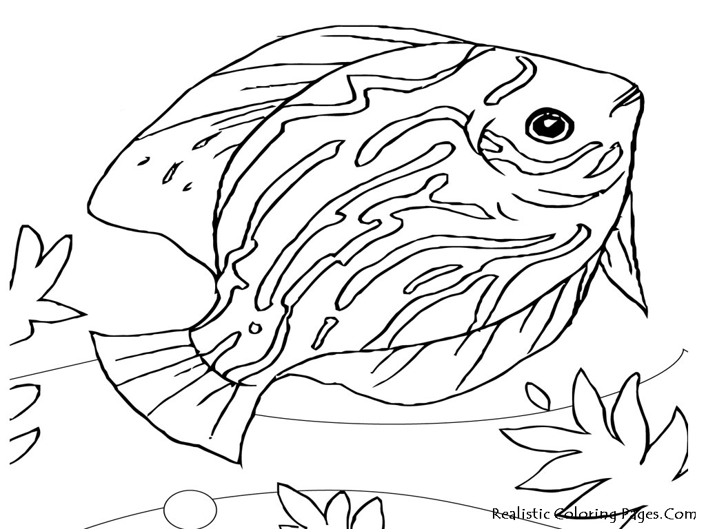 Realistic Landscape Coloring Pages Realistic Animal Coloring Pages
