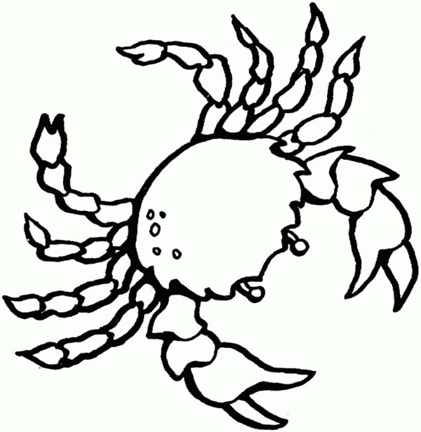 Realistic Ocean Animals Coloring Pages Clipart   Free Clipart