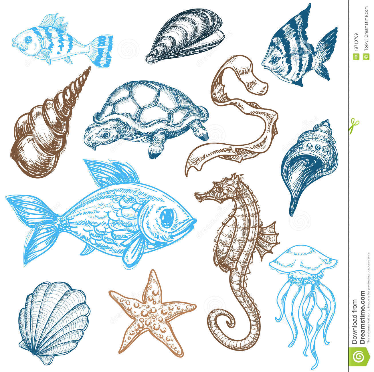 Royalty Free Stock Images  Marine Life Collection
