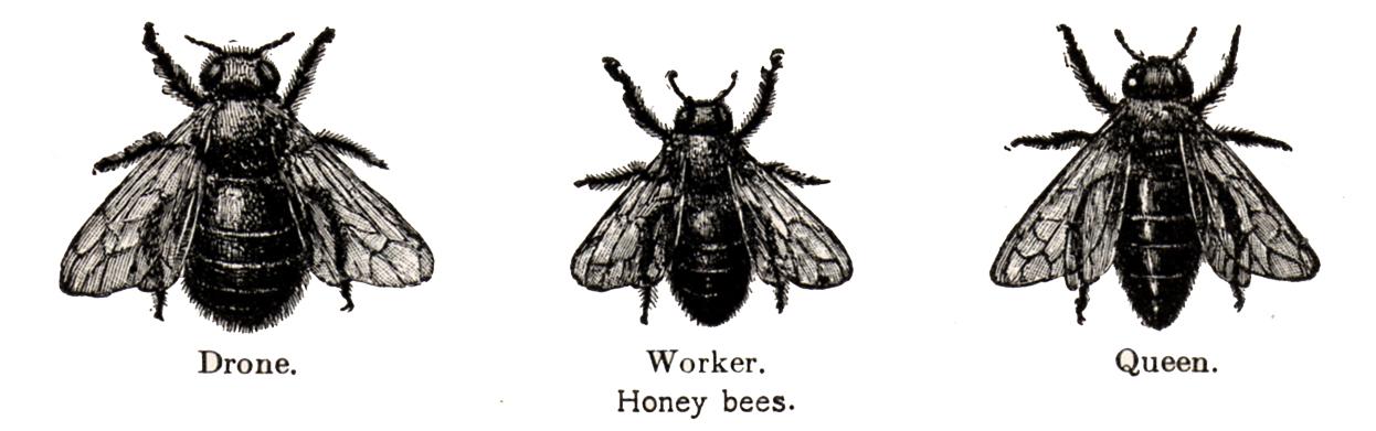vintage bee clip art - photo #19