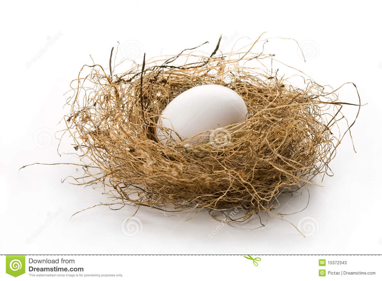 In The Bird Nest Isolated On White  Concept Of Retirement Nest Egg