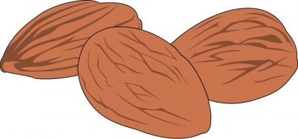 Nut 02 Vector Clip Art   Free Vector For Free Download