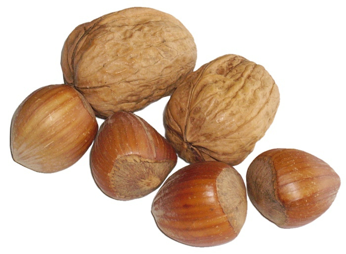 Two Walnuts And Four Hazelnuts    Food Nuts Two Walnuts And Four