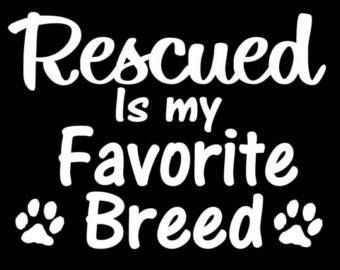 Rescue    The Reason Is You    Pinterest