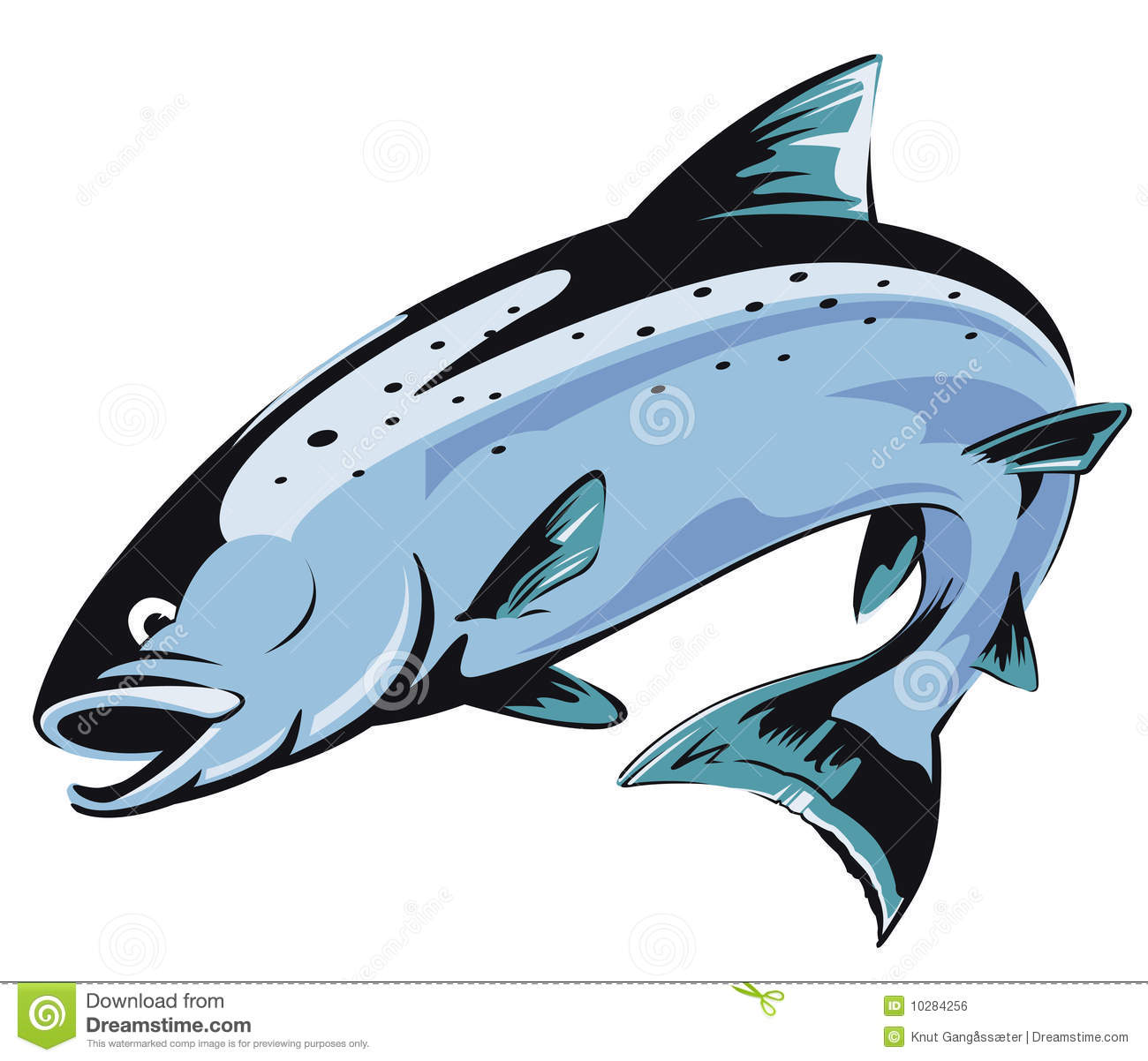 Jumping Salmon Royalty Free Stock Image   Image  10284256
