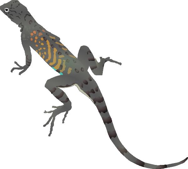 Az Lizard Clip Art At Clker Com   Vector Clip Art Online Royalty Free