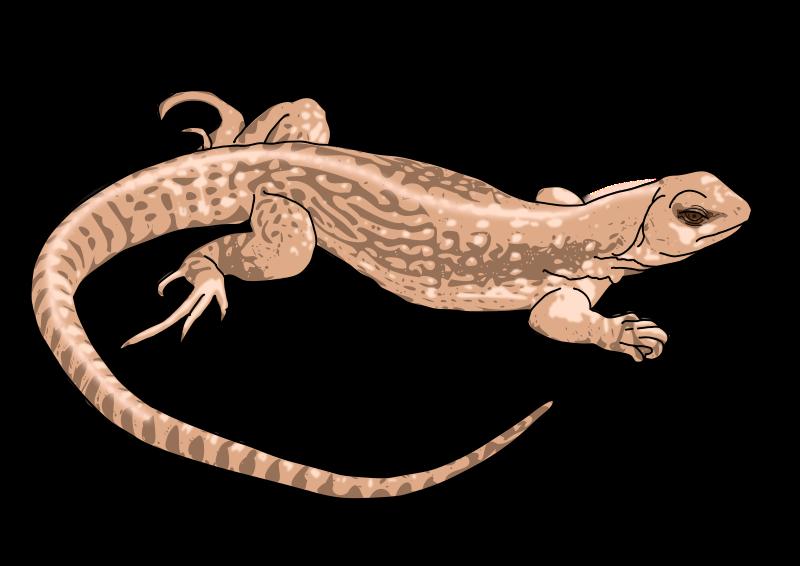 Free Realistic Lizard Clip Art