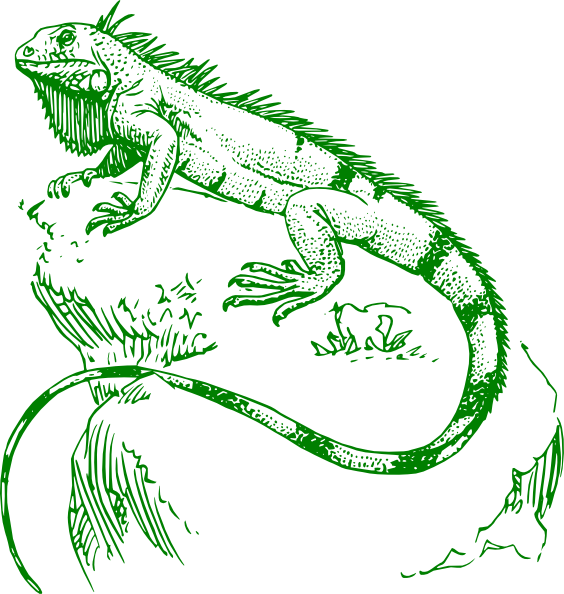 Iguana Clip Art At Clker Com   Vector Clip Art Online Royalty Free